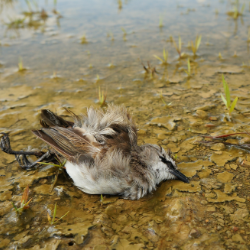 dead bird in contaminated stream